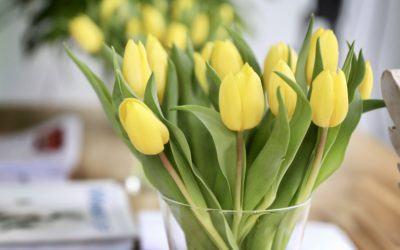 Zelf Shiatsu in de Lente